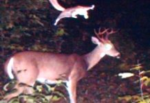 25 Animal Trail Cam Photos Reveal What They're Secretly Up To (Photos).