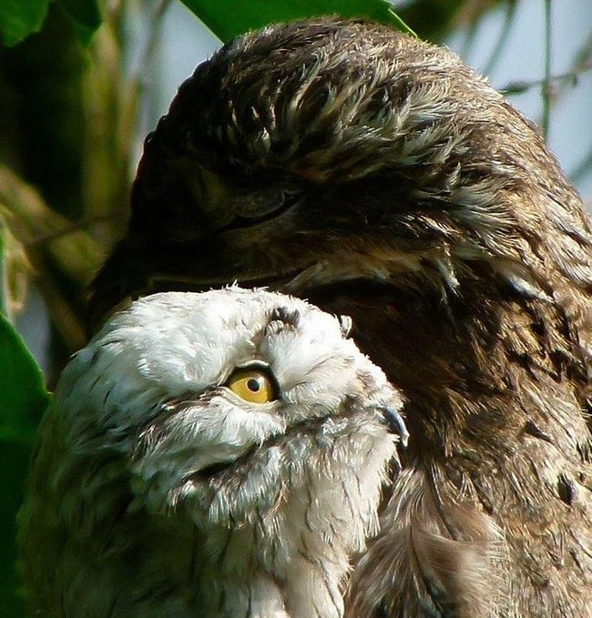 Wild Facts About The Potoo That Prove They're One Of The Strangest