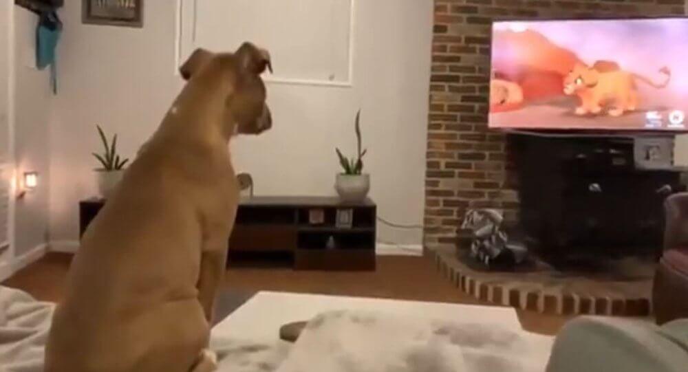 Dog Watches