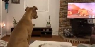 """Dog Watches """"The Lion King"""" Movie And Her Reaction Is Incredible – PAWS PLANET"""