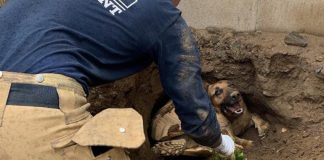 Firefighters rescue German Shepherd and a tortoise from hole in Fontana