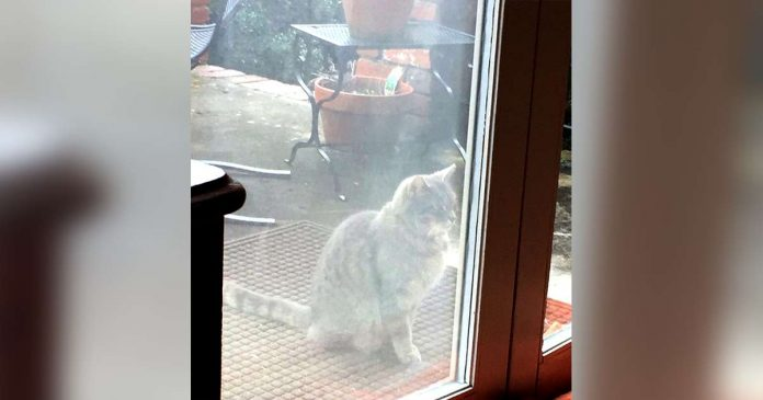 Heartbroken Cat Visits Her Neighbor Every Day Looking For A Special Friend Who Had Gone Forever – PAWS PLANET