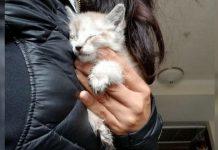 Found Kitten