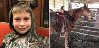 Rescue saves 30-year-old horse from slaughter after little boy is outbid at auction