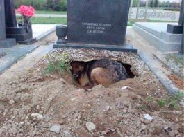 The true story behind the viral photo of dog sleeping in a cemetery