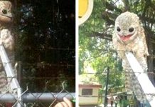 Wild Facts About The Potoo That Prove They're One Of The Strangest Creatures On The Planet
