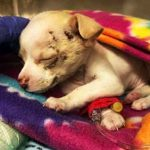 Tiniest stray puppy manages to survive even after falling from the sky