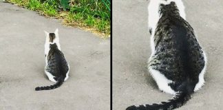 10+ Cats With The Craziest Fur Markings You'd Almost Think Were Photoshopped – PAWS PLANET