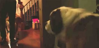 Watch His Adorable Reaction – PAWS PLANET