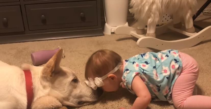 dog goes viral