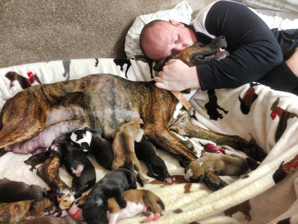 dog refuses to give birth