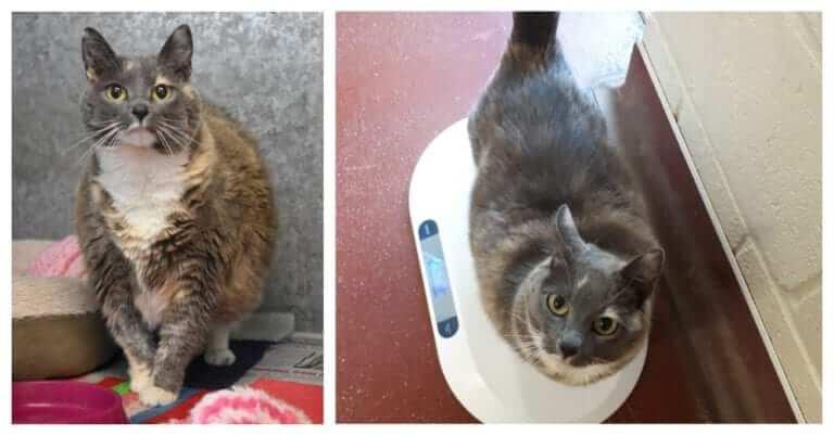 Fattest Cat