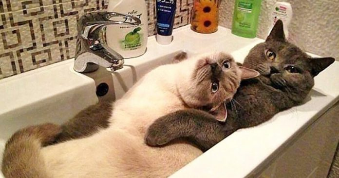 20 Awkward Cats Brazenly Caught by Human Paparazzi – PAWS PLANET