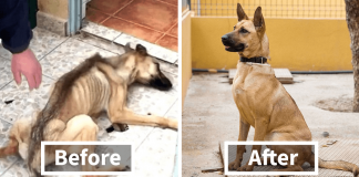 20+ Pictures Of Dogs Before And After Being Rescued That Will Melt Your Heart – PAWS PLANET