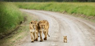 25 Unforgettably Sweet Pictures Between Wild Animals And Their Babies – PAWS PLANET