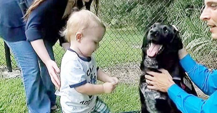 This baby couldn't tell his parents about his abusive sitter but his dog could