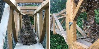 """Cat Dad Builds """"An Epic Outdoor Construction"""" For Cats So They Can Always Be Safe – PAWS PLANET"""