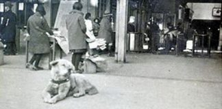 Hachiko, The World's Most Loyal Dog With Amazing Story Will Break Our Heart – PAWS PLANET