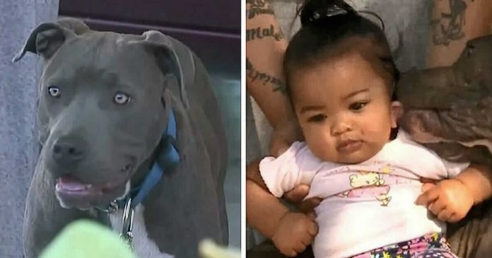 Hero Pit Bull Drags 7-Month-Old Baby By Her Diaper After House Goes Up In Flames – PAWS PLANET