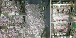Hungry Rat Broke Into An ATM, Ate Nearly $20.000 And Died – PAWS PLANET