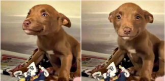 Puppy Can't Stop Smiling After Being Rescued And The True Story Behind His Viral Video – PAWS PLANET