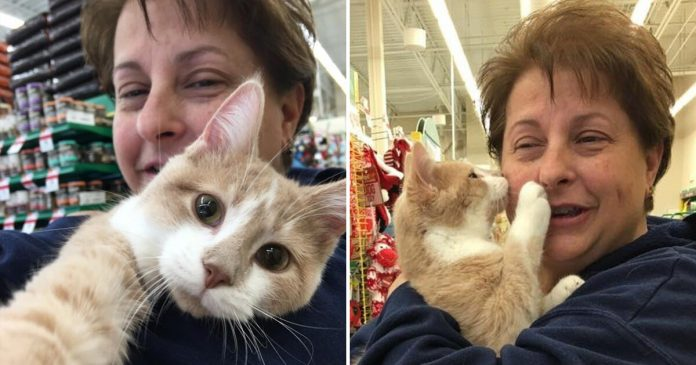 Rescued Cat Can't Stop Licking And Hugging His New Owner After Being Adopted – PAWS PLANET