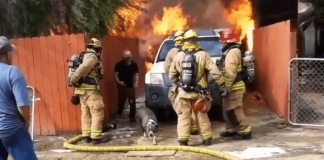 Shocking Video Shows Man Rushed Past Firefighters Into His Burning Home To Save His Dog – PAWS PLANET