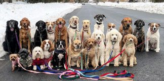 These Lovely Dogs Go Walking And Pose For Pictures Together Every Day – PAWS PLANET