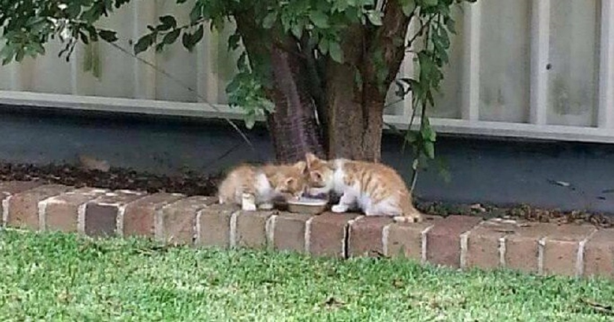 Woman Found Blind Twin Kittens That Guide Each Other
