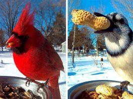 Bird Feeder Photo