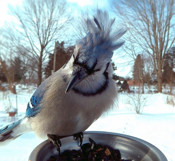 Bird Feeder Photo