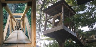 Cat Dad Builds Treehouse So His Indoor Cats Can Play Outside