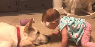 Parents captured footage of baby and dog goes viral