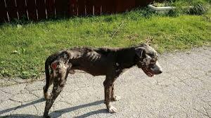 Skeleton dog
