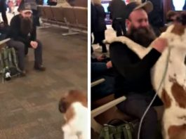 Dog sees bearded man in airport & freaks out when he recognizes his face