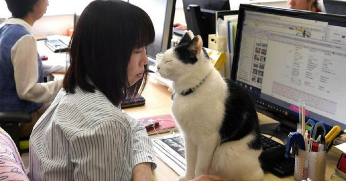 Japanese Company Finds The Purr-fect Solution To Counter Employee Stress At Workplace – PAWS PLANET