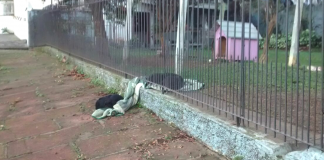 Dog drags blanket all the way outside, and mom follows to take a picture