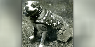 How A Stray Puppy Became A War Hero
