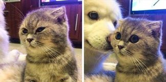 10+ Animals Whose Emotions Are So Vivid, They Simply Can't Hide Them PAWS PLANET