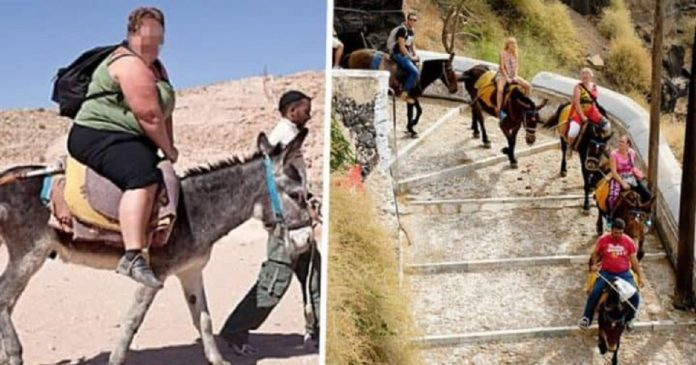 Tourists Are Injuring Donkeys and Mules in Santorini Island