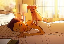 Artist's breathtaking pics remind us to appreciate the little moments with our dogs