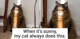 20+ Photos Proving That Life With A Cat Is Always Full of Surprises PAWS PLANET