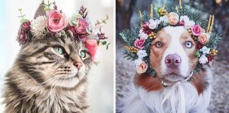 Artist Makes Flower Crowns For Animals And They Look Majestic – PAWS PLANET