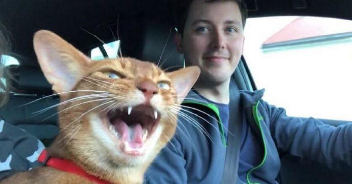 Cat Joins His Owner For An Improvised Duet That Will Start Your Day With A Smile PAWS PLANET