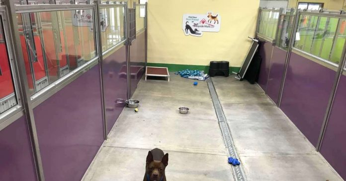 Dog Finds Himself All Alone At Shelter After Everyone Else Gets Adopted PAWS PLANET