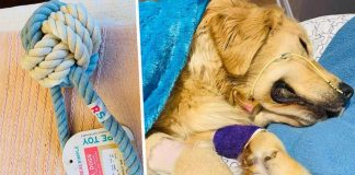 Pet Owner's Heartbreaking Warning About Rope Toys After Dog Tragically Dies