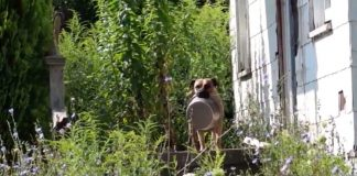 Homeless Dog Carries Bowl Around Just Wants Someone To Feed Him PAWS PLANET