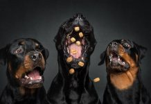 Look At These Hilarious Expressions Of Dogs Trying Very Hard To Catch Treats In Mid-Air – PAWS PLANET