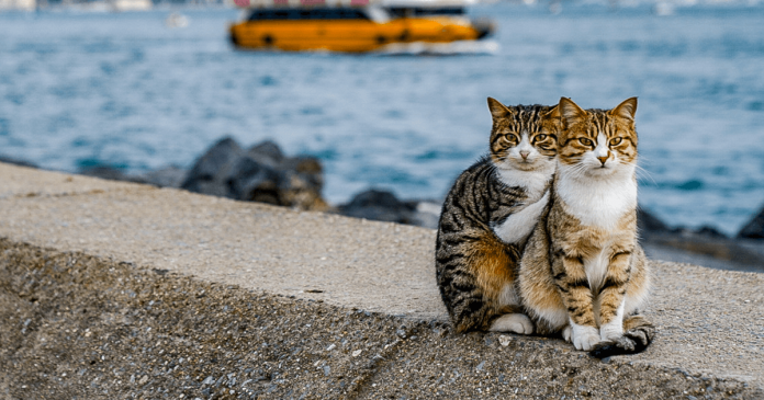 People Think That These Stunning Photos Of Two Stray Cats Cuddling Are Staged. And You? PAWS PLANET