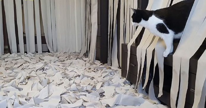 Cat Goes Crazy In A Room Full Of Toilet Paper PAWS PLANET